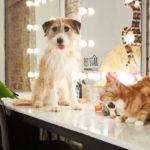 """Amazon Pet Star: il 52% degli italiani si ritiene """"genitore"""" di un cucciolo"""