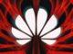 Il Ceo di Huawei vuole parlare al Presidente Biden ed elogia Apple