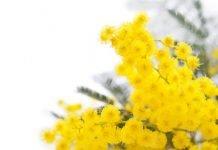 progetto mimosa